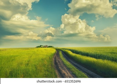 A dirt road in the green field of wheat. A beautiful  sky and rural houses in the distance. Beautiful spring, summer landscape. Vintage