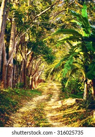 dirt road in jungle, Koh Samui, Thailand