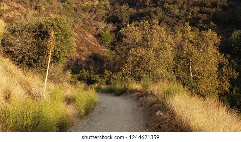 Dirt road leading down a hill side, San Gabriel Valley, CA