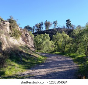 Dirt road leading up a hill shaded by willow trees, California