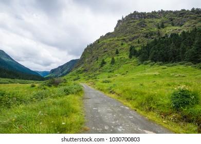 Dirt Road leading to Narang Ranch Ranch in Nyingchi, Tibet