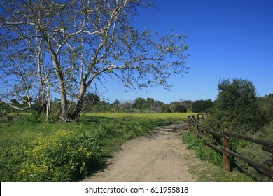 Dirt road leading past a sycamore tree, Orange County, CA