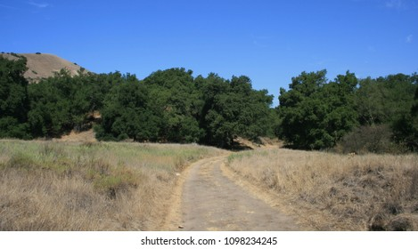 Dirt road leading through a meadow, Orange County, CA