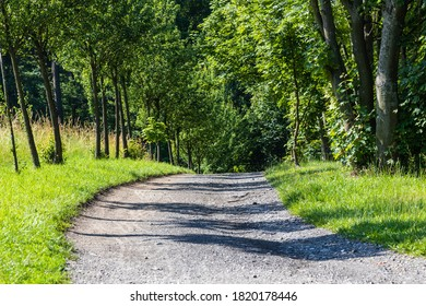 dirt road lined with trees leading to the forest