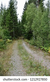 Dirt road in a lush green coniferous forest