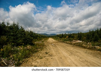 Dirt road in a national park in Canada