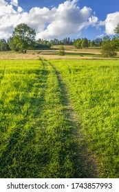 Dirt road on a green meadow in summer.