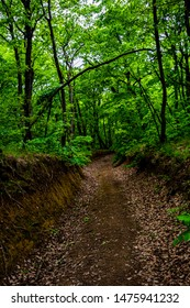 Dirt road on a hiking trail through a dense deciduous forest in Macin Mountains in Romania in spring