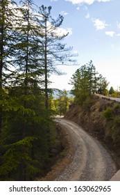 Dirt road passing through a forest, Kufri, Shimla, Himachal Pradesh, India