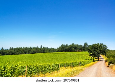 Dirt road passing through a vineyard in Oregon wine country
