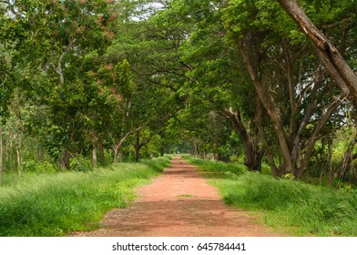 Dirt road path through the forest (Tree tunnel) and lush green meadows