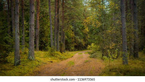 dirt road in the pine forest