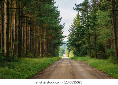 A dirt road and pine trees in Dolly Sods Wilderness, Monongahela National Forest, West Virginia.