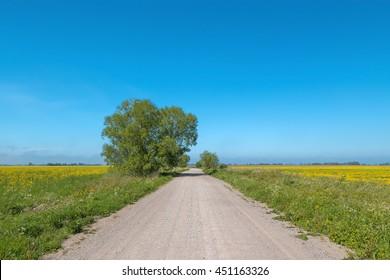 Dirt road running through the green fields