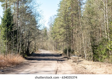 Dirt road at Russian forest in spring time