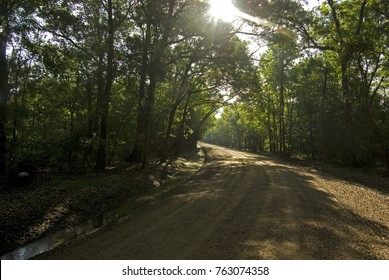 A dirt road in southwest Louisiana near Loraine Bridge.