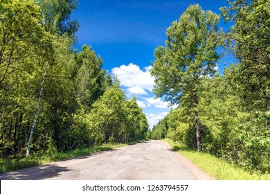 dirt road in the summer sunny forest