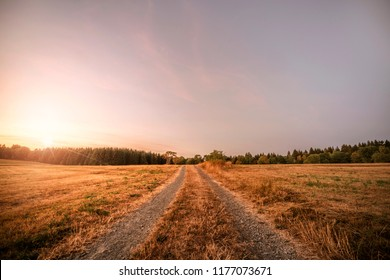Dirt road in the sunset going to a forest on a summer evening