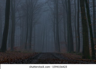 dirt road through the foggy forest - Shutterstock ID 1594156423