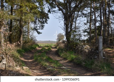 Dirt road through a forest with a windmill ahead at the swedish island Oland