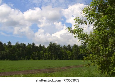 a dirt road through a green field under a blue sky with white clouds leads into the forest