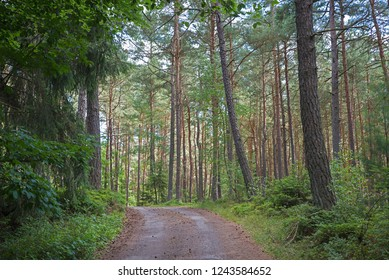 dirt road through green pine forest, lower bavaria