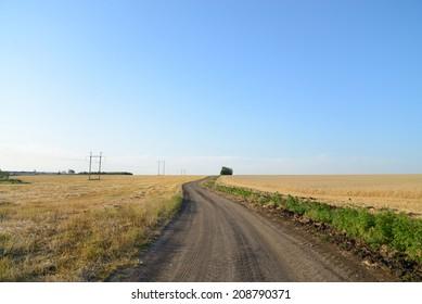 Dirt road through a wheat field, blue sky
