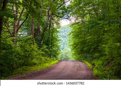 A dirt road through the woods in Warren County, Pennsylvania, USA on a sunny summer day