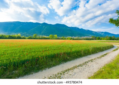 Dirt road trough italian countryside. Field of red poppies. Rural life. Italian landscape