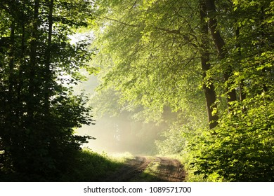 Dirt road trough the spring forest during sunrise.
