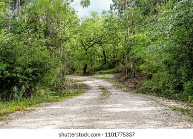 Dirt road trough woods in Portugal