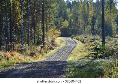 Dirt road vanishes in forest.