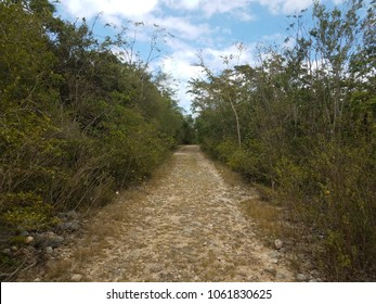 dirt and rock trail in dry forest in Guanica Puerto Rico