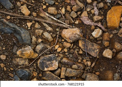 Dirt, rocks, bits of vegetation, and other debris on the ground of a bush walking track in Tasmania, Australia