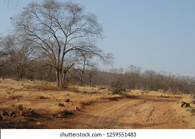 Dirt track and landscape in Ranthambore National Park, Rajasthan, India
