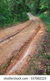 dirt trail road in jungle