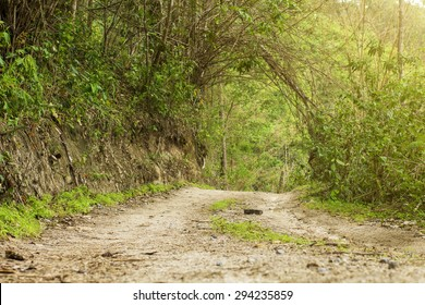 Dirt trail road in jungle.