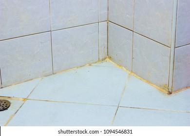 Dirty bathroom floor black mold growing on shower tiles in bathroom.