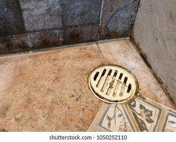 Dirty black mold on shower tiles in bathroom. Dirt Bacteria. Many stain of soap and shampoo. Hair fall. Time to clean. Sanitation concept.