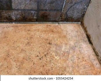 Dirty black mold on shower tiles in bathroom. Dirt Bacteria. Many stain of soap and shampoo. Time to clean. Healthy concept.