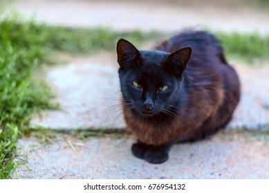 Dirty black wandering cat