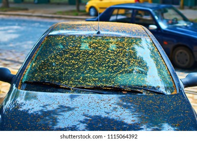 Dirty car windscreen due to sticky coating from being parked under a linden tree caused by aphids.