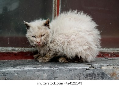 Dirty cat in an alley