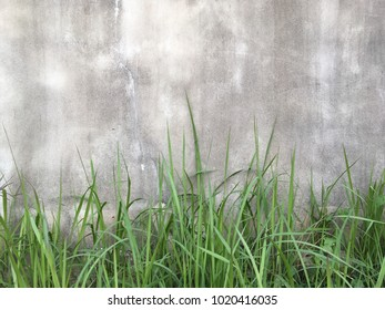 Dirty cement wall with grass floor texture