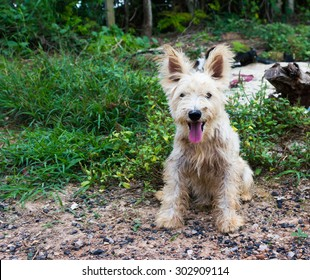 Dirty Dog Images Stock Photos Vectors Shutterstock