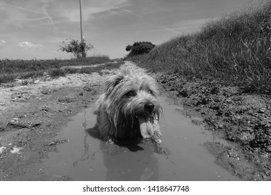 Dirty dog cooling down in a muddy puddle
