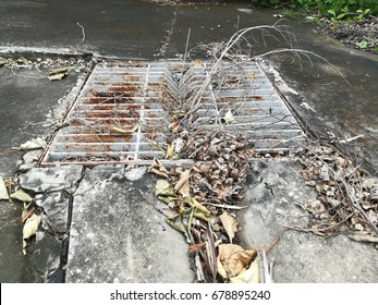 Dirty drain cover by dry leave ,tree,dry branch on road