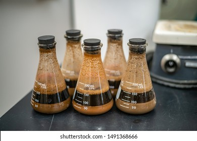 Dirty Erlenmeyer Flasks with Dark Brown Soil Texture Samples suspended in a coffee like liquid solution. Sand has precipitated at the bottom while silt and clay remain in suspension.