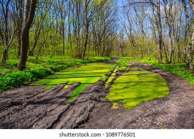 dirty flooded ground road through a green spring forest