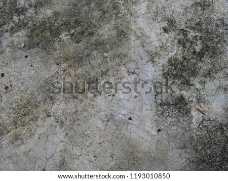 Dirty Fungus Mold On Concrete Floor Stock Photo Edit Now